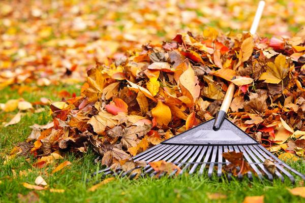 Осенью листья деревьев нужно уложить в компост, и к весне у вас будет готово удобрение.