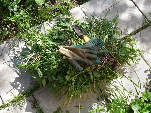 Неплохое удобрение получается из свежей травы