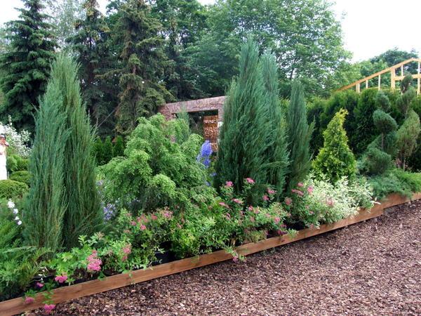 Сейчас нужно посадить новые и пересадить уже имеющиеся растения