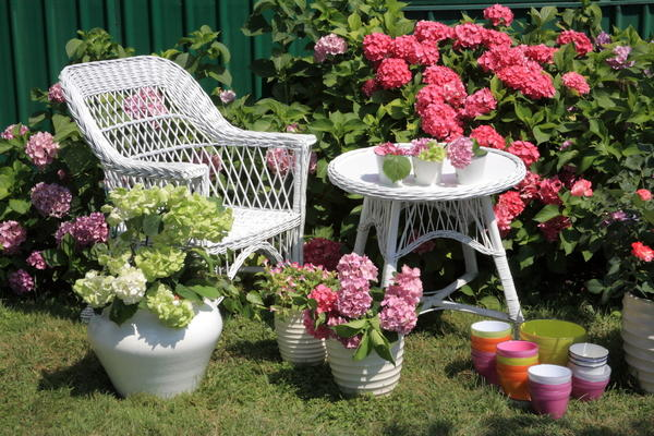Несколько кустов гортензий станут ярким украшением любого сада