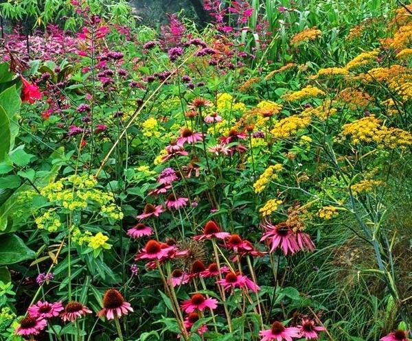 Целебные травы благотворно влияют на наш организм