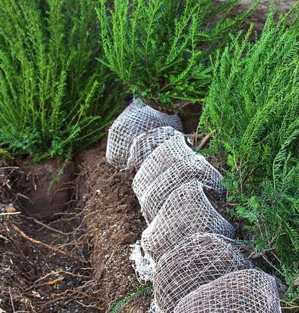 Если земляной ком обмотан сеткой из синтетического материала, ее нужно обязательно снять