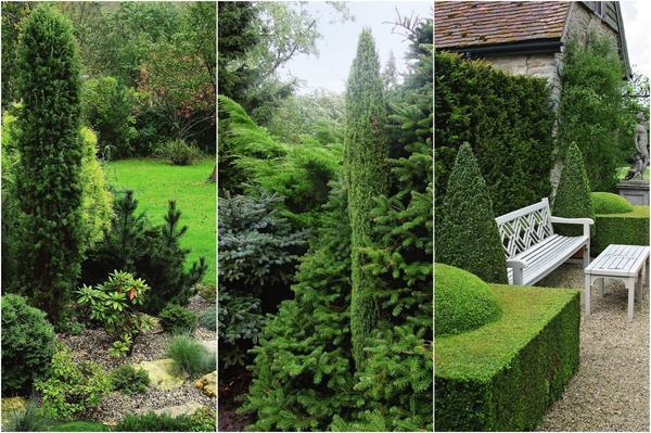 Хвойные растения с вертикальной кроной в дизайне сада