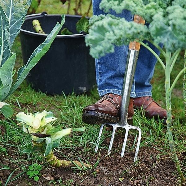 Кочерыжки капусты обязательно уберите с грядки