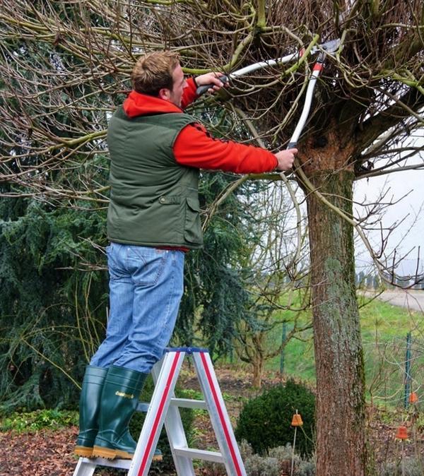 Прическа для деревьев