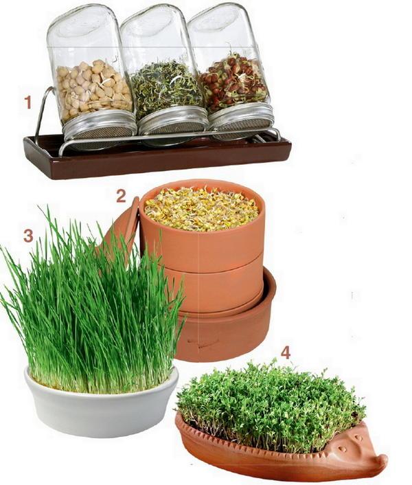Правильная посуда для проращивания семян