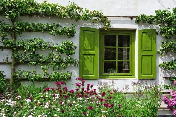 Если вы хотите вырастить в своем саду что-нибудь необычное, переселите яблони и груши на шпалеры.