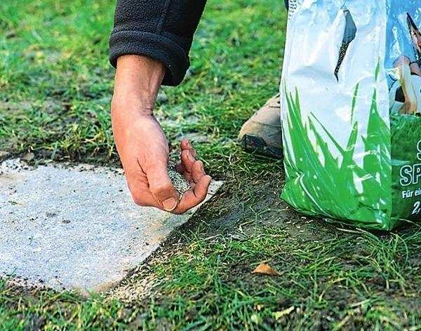 Чтобы плиты и газон визуально стали единым целым, посейте в местах стыков газонную траву.