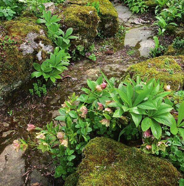 Плотный зеленый ковер мха дает надежный приют множеству маленьких обитателей лесов и болот