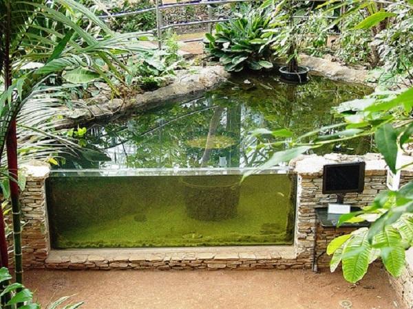 Уличный аквариум с одной стеклянной стенкой. Фото с сайта remont-39.ru
