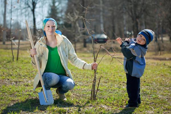 Ловим удачные моменты для пересадки деревьев