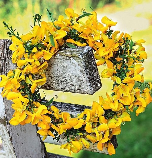 Ракитник прутьевидный (Cytisus scoparius) прекрасно подходит для декора террасы!