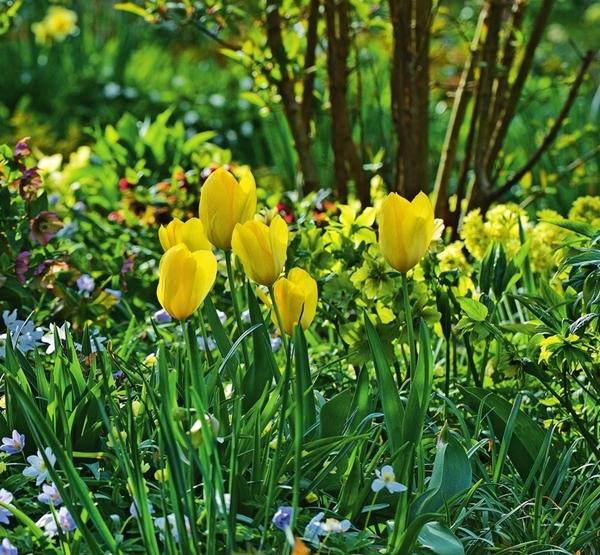 Любимый сад, где цветут и пахнут солнечные растения, станет неизменным источником вдохновения и позитива.