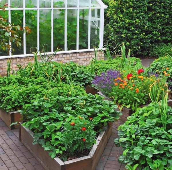 Смешанные посадки, где мирно соседствуют ягоды, овощи и цветы, — надежная защита от сорняков-захватчиков.