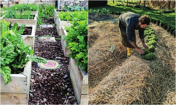 Слева: В качестве мульчи могут выступать многие материалы. Справа: Соломенная мульча защитит посадки от нежелательных соседей - сорняков.