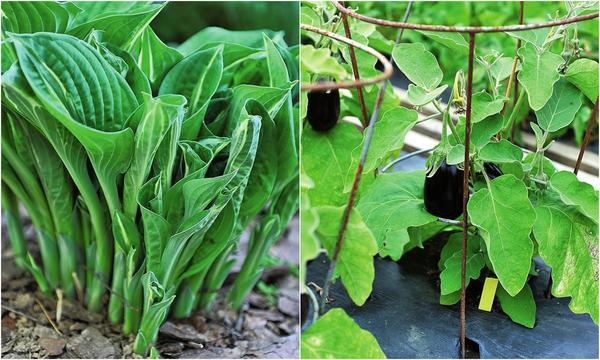 Слева: Сосновой корой мульчируйте растения, которые любят кислые почвы. Справа: Спанбонд и другое нетканое полотно хороши для мульчирования.