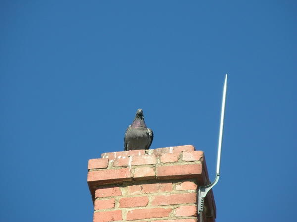 Мирная птица находится под защитой инженерных систем