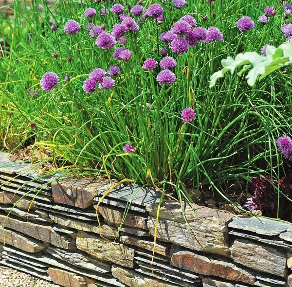 Поднятые грядки, обложенные камнем, выглядят декоративно и защищают от сорных трав.