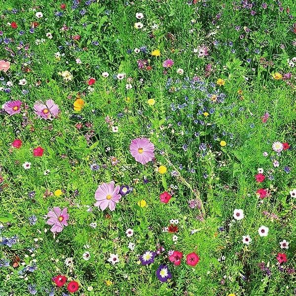 Мавританский газон радует глаз веселыми яркими цветами