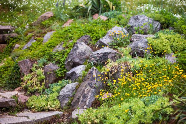 Не случайно каменистые сады, рокарии и альпийские горки так полюбились нашим цветоводам