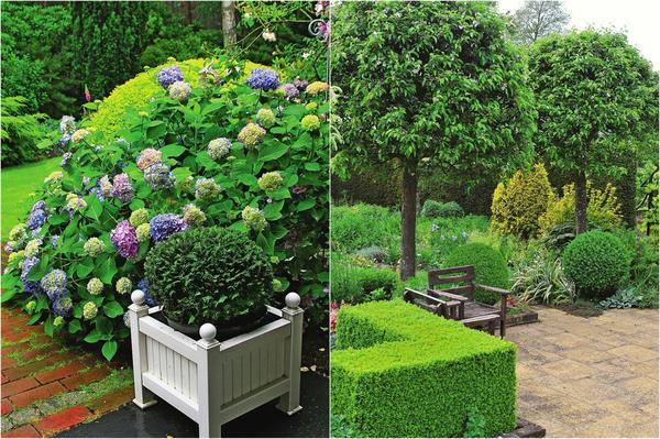 Слева: Огромная гортензия повторяет форму миниатюрной туи. Справа: Приведите к общему знаменателю кроны деревьев и кустарников.