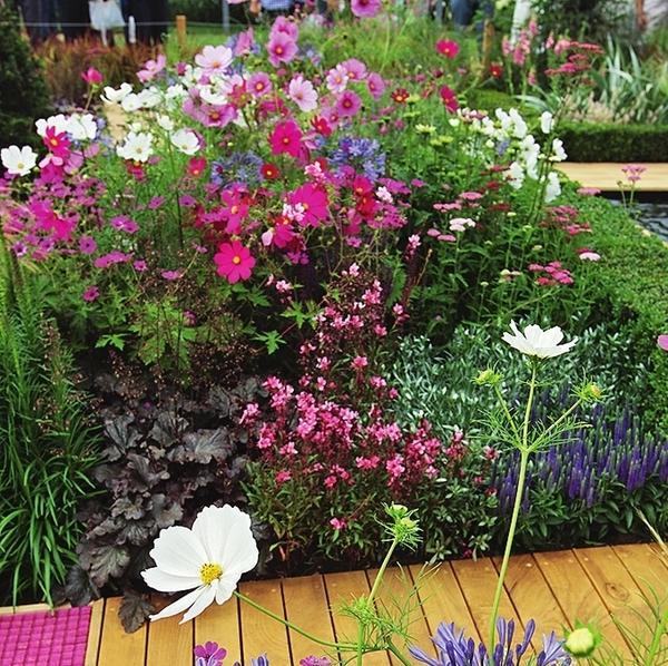 А вот растения могут быть любыми, необходимо лишь правильно подбирать их цветовые сочетания в рамках отдельных садовых зон, уголков, цветников, но не сада в целом.
