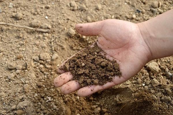 Сначала нужно понять: какая все-таки у вас почва?