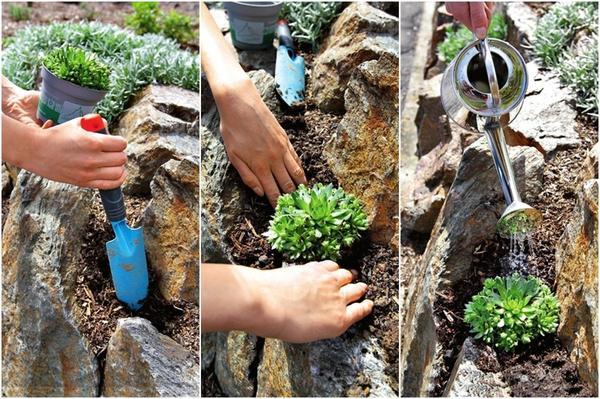 Заполните широкие швы между камнями цветочным или садовым субстратом с содержанием песка, выньте растения из горшков, вдавите корневой ком в землю и полейте.