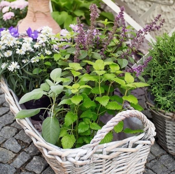 Горшочки с посаженными в них пряно-ароматическими растениями дают возможность создать садик даже на мощёной площадке.