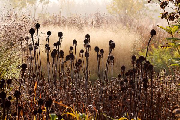 Их цель - играть на закатном солнце. Фото с сайта oudolf.com
