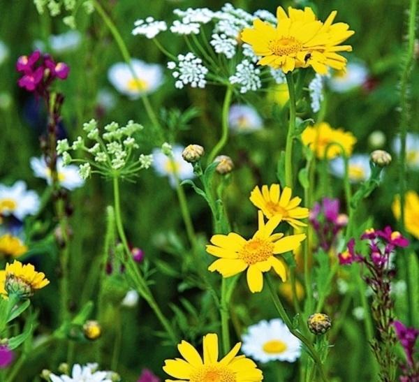 Луг с полевыми цветами