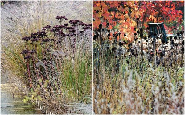 Слева: Симпатичные полузонтики очитка (Sedum) после цветения становятся бордовыми, а со временем приобретают коричневый оттенок. Справа: Почти черные соцветия эхинацеи (Echinacea) напоминают маленьких ежиков.