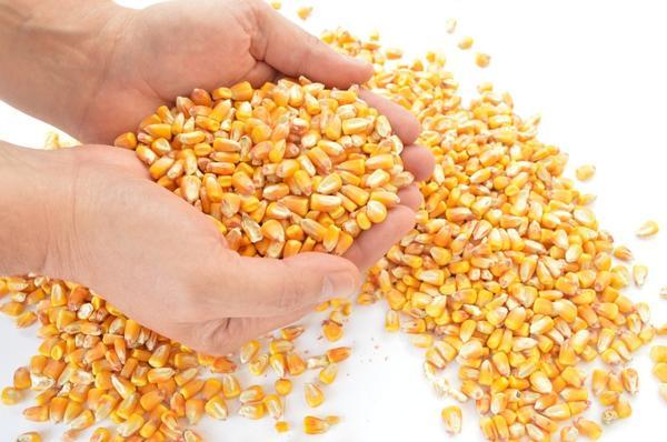 Чтобы получить хороший урожай, нужно придерживаться некоторых правил