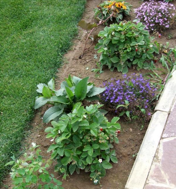 Посадка растений на расстоянии