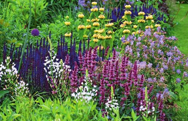 Поселите в саду растения с фиолетовыми и пурпурными цветками!