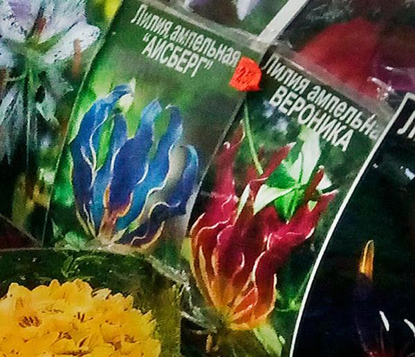 На фото обычное домашнее растение глориоза, причем слева, опять же, подкрашенная в синий цвет.