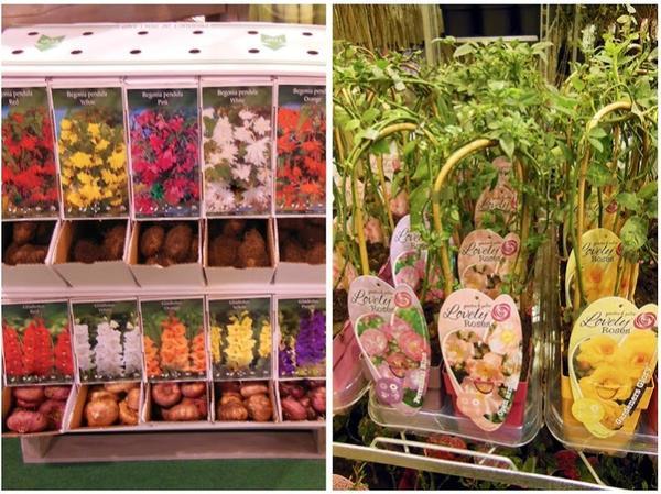 Слева: типовые коробки-шоубоксы, которые можно встретить на любом рынке. Справа: вариант упаковки роз.