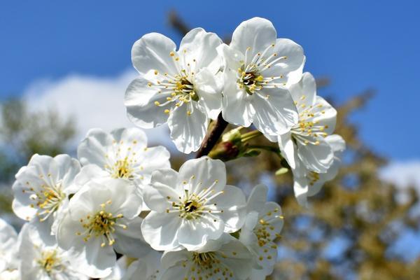После цветения вносят первую подкормку