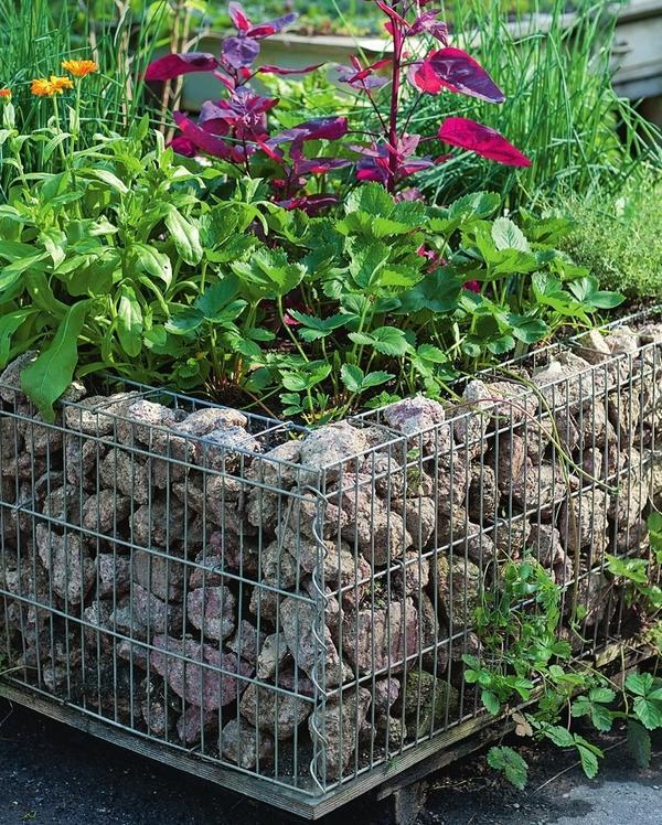 Подпорные стенки высокой грядки сделаны из габионов.