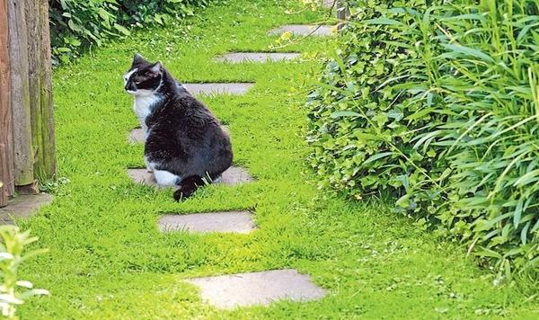 Step by step - отличный вариант для газона