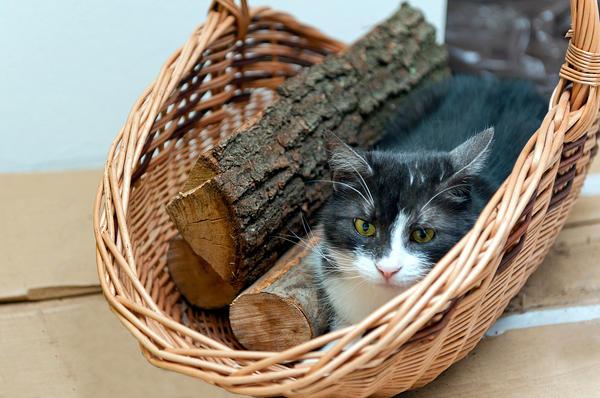 Можно приспособить под дрова обычную корзинку