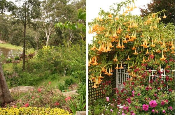 Слева: дикие уголка. Справа: экзотика. Фото с сайта gardendrum.com