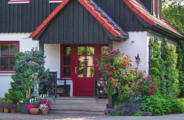 Роза Rosarium Uetersen, растущая у входной двери в дом, пленяет крупными густомахровыми цветками темно-розовой окраски. Беседу тет-а-тет с королевой цветов ведет картофельное дерево (Solanum rantonnettii) в горшке, усыпанное многочисленными фиолетово-синими цветками-звездами