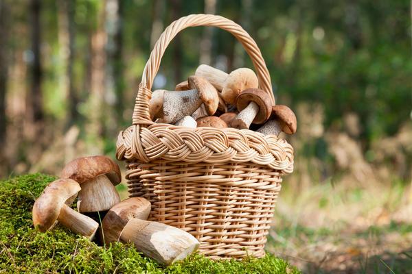 Как не заблудиться в лесу и вернуться с полной корзиной?