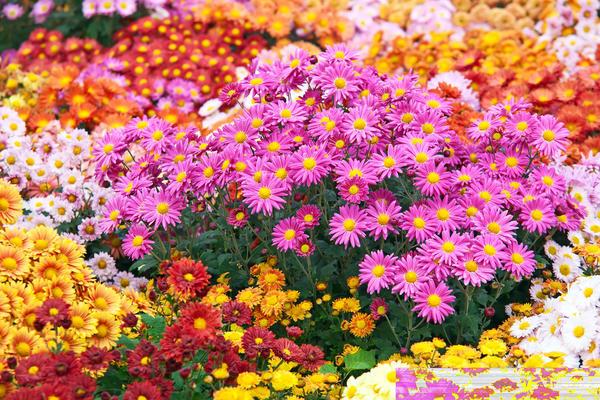Лучшие цветы для срезки