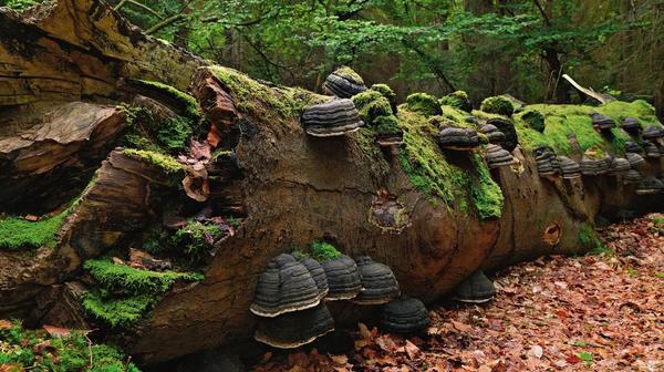 Мхи и места их обитания