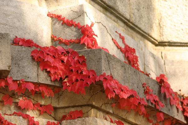 Роскошные краски осени