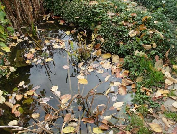 Сезонные работы в саду и огороде: вторая неделя ноября