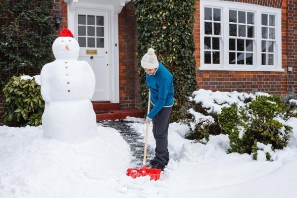 Сезонные работы в саду и огороде: конец ноября – начало декабря
