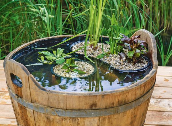 Мини-пруд из деревянной кадки